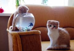 смешные котята ловят рыбу