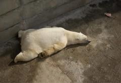 белый медведь картинка для детей