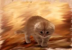 картинки на рабочий стол котята пушистые