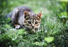 кошка на охоте картинки