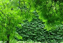 зеленая природа, деревья, растения, ветви, HD, бесплатно,…