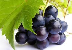зеленый виноград бесплатно обои