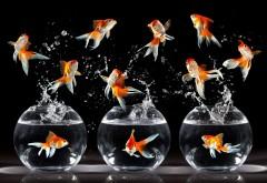 веселая рыба