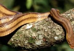 HD Змея на Древе