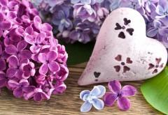 Сердце сиреневые цветы