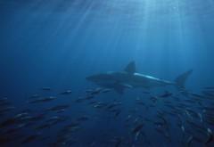 Острова Южная Австралия Нептун Большая белая акула