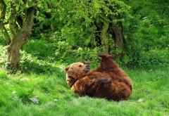 обои медведь скачать бесплатно