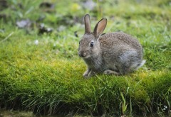 кролик в траве