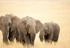 маленькие слонята фото