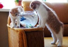 котенок ловит рыбу