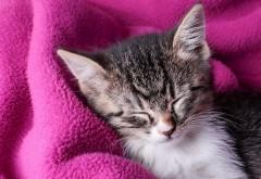 спящий котенок картинки
