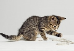 котята, кошки, котенок, мило