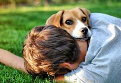 любящий щенок обои