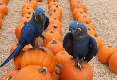 ара, попугай, птица, тропический, тыква, хэллоуин, Halloween