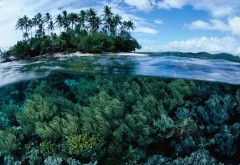 Коралловое дно океана