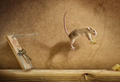 мышеловка, мышь, сыр, юмор, прикол, прыжок
