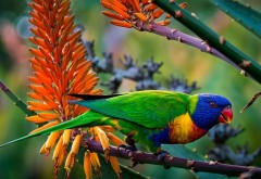 multi color parrot free desktop wallpaper downloads