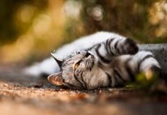 сладкая кошка обои скачать