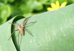 картинки про пауков