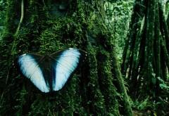 Природа, деревья, насекомые, бабочки, HD, 1080p