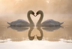 Природа, любовь, птицы, лебеди, сердца, романтика