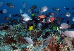 море, риф, океан, тропические, подводные, HD, обои