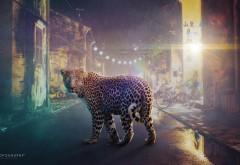 ночь леопард