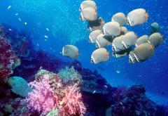 Океан, море, природа, подводный, тропический риф
