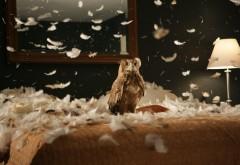 картинки совы прикольные