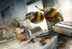 парикмахерская, юмор, шмель, стрижка, прикол, смех, пчел…