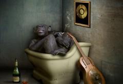 Прикольные обои обезьяны в ванной смешно