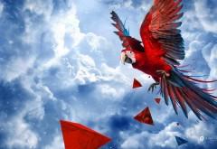 попугай картинки для детей