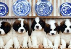 Фоны, щенки, щенята, щенок, малыши, собаки, собачки