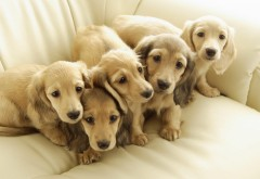 щенки, щенок, милашки, собака, собаки, HD
