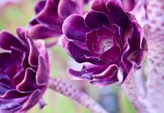 wdtns, цветы