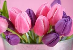фиолетовые розовые тюльпаны фоны
