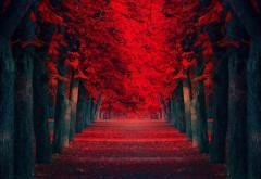 ряд красных деревьев картинки
