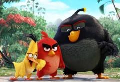 Крутые птицы мультфильм скачать обои