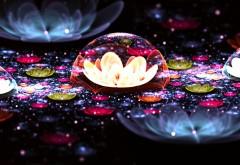 Фото красивого темного цветка под куполом на рабочий с…