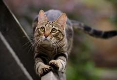 Хвост, кошки, животные, кот, лапы, лучшие обои