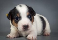 симпатичный щенок